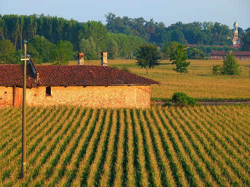 Agricoltura - foto di BORGHY52