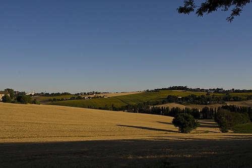 Agricoltura - foto di giorgio.montesi