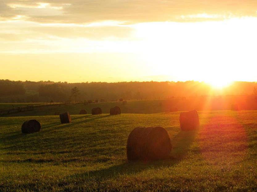 Agriculture - Photo credit: Universal Pops (David) via Foter.com / CC BY-NC-SA