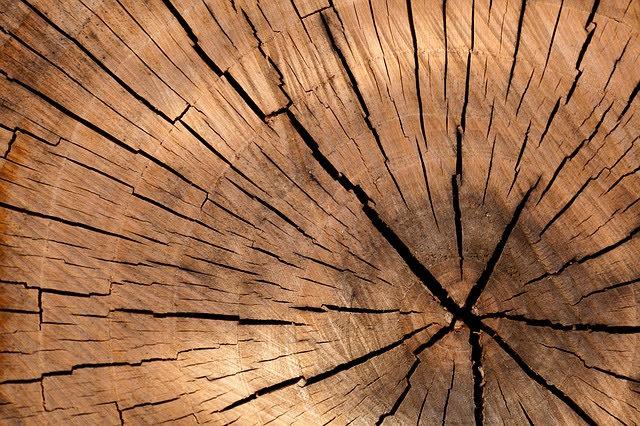 Incentivi biomasse