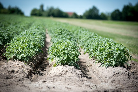 Agricoltura - Photo credit: Foto di Wolfgang Ehrecke da Pixabay