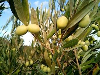Agricoltura - Photo credit: Patricia Maine Degrave da Pixabay