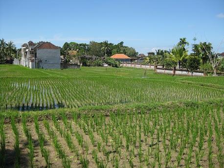 Agricoltura - Foto di yogipogi da Pixabay
