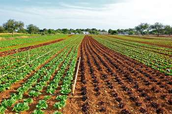 Agricoltura - Photo credit: Isabel Perelló da Pixabay