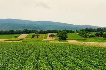 Agricoltura - Foto diSchwoazedaPixabay