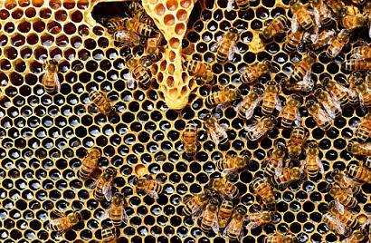 Fondi UE apicoltura - photo credit: PollyDot