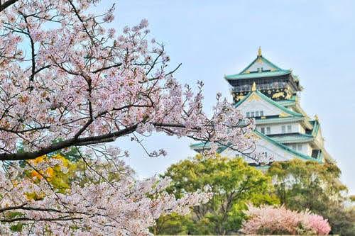 Borse studio Giappone