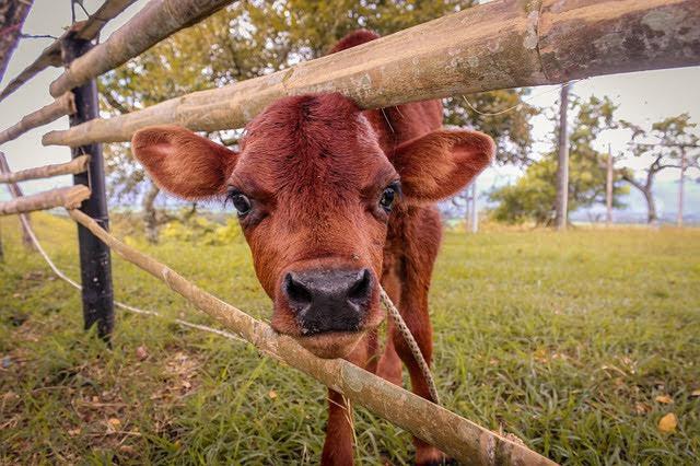 Aiuti zootecnia - Photo credit: Foto di Carlos Andrés Ruiz Palacio da Pixabay