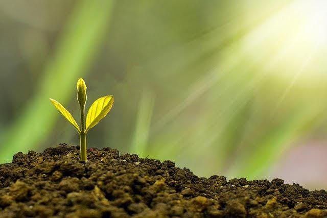 Stati generali della Green economy 2020 - Foto di eko pramono da Pixabay