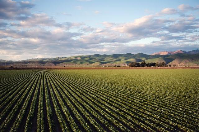 Incentivi biogas - Foto di Tim Mossholder da Pexels