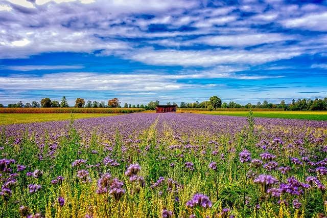 Politica agricola comune - Foto di Peter H da Pixabay