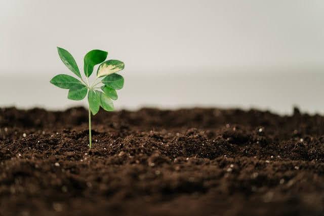 Investimenti sostenibili - Foto di Ron Lach da Pexels