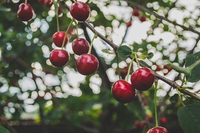 Agricoltura biologica - Foto di Free-Photos da Pixabay