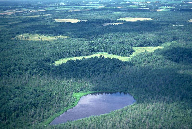 Foresta - Foto di Cedar Creek Ecosystem Science Reserve